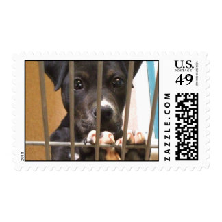Adopt a puppy postage