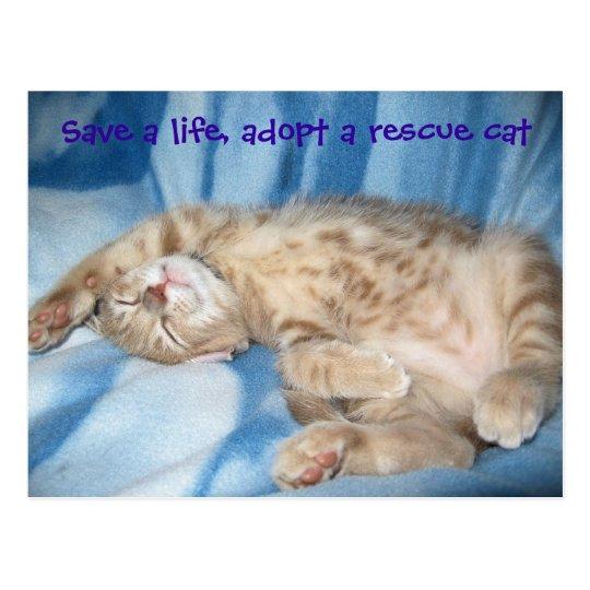 Adopt a rescue cat Postcard
