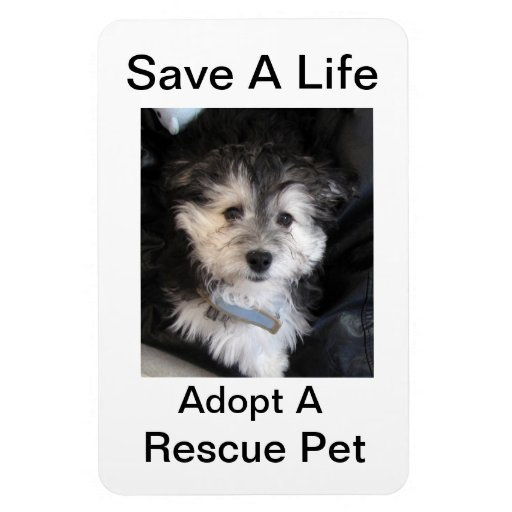Adopt a Rescue Pet Rectangle Magnets