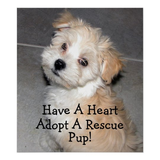 Adopt A Rescue Pup! Poster