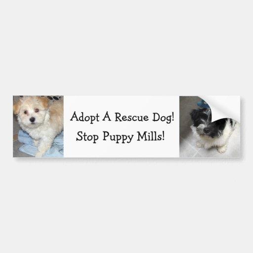 Adopt A Resuce Dog - Havanese Puppies Car Bumper Sticker