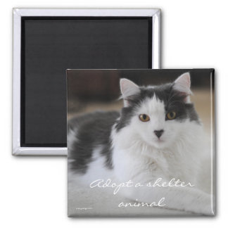 Adopt a shelter animal 2 inch square magnet