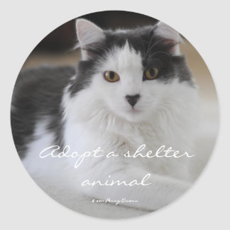 Adopt a shelter animal classic round sticker
