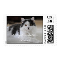 Adopt a shelter animal postage