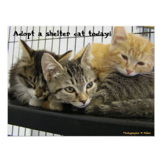 Adopt a shelter cat today print