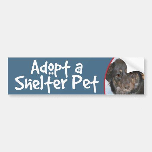 Adopt a Shelter Pet Australian Shepherd Photo Bumper Sticker