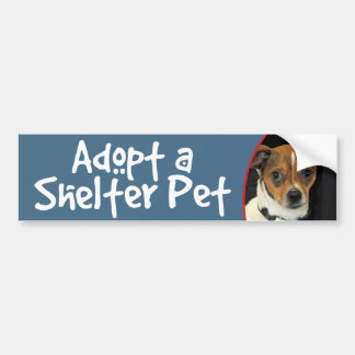 Adopt a Shelter Pet Chihuahua Mix Bumper Stickers