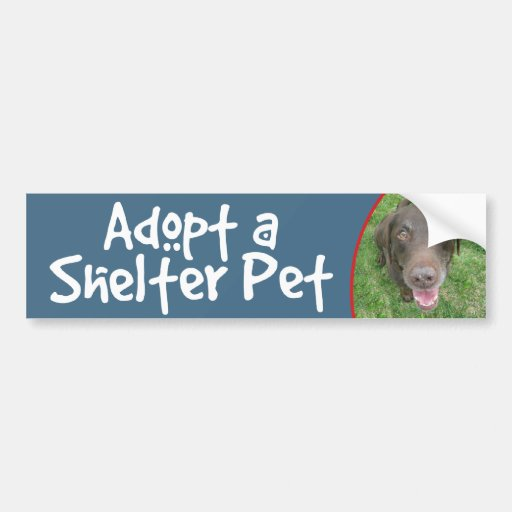 Adopt a Shelter Pet Chocolate Lab Bumper Sticker