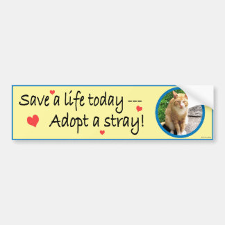 Adopt A Stray #2 Bumper Sticker