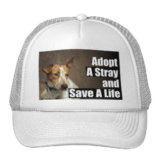 Adopt A Stray Hat