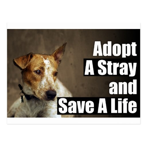 Adopt A Stray Post Card