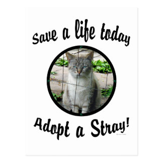 """Adopt A Stray"" Postcard"