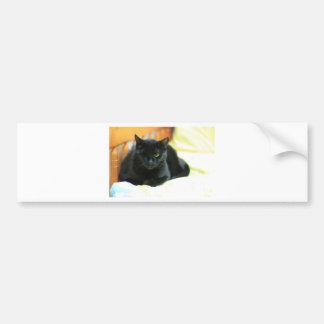 ADOPT Blanche Bumper Sticker