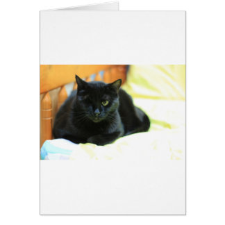 ADOPT Blanche Card