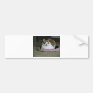 ADOPT Cuddle Buttons Bumper Sticker