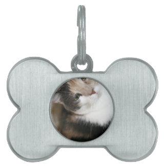 ADOPT Gina Pet Tag