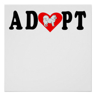 Adopt Samoyed Poster