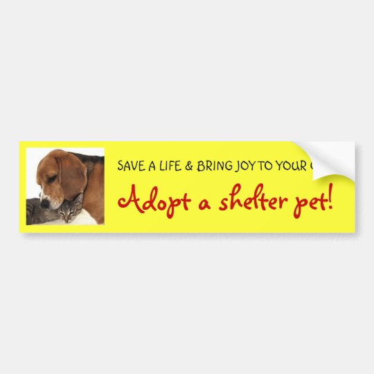 Adopt Shelter Pet, Shelter Dog, Shelter Cat Bumper Sticker