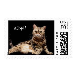 Adopt! Stamps