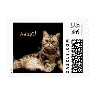 Adopt Stamps