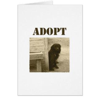 Adopt stray dog card