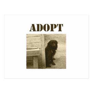 Adopt stray dog postcard