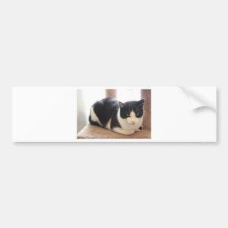 ADOPT Ziggy Bumper Sticker