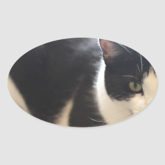 ADOPT Ziggy Oval Sticker
