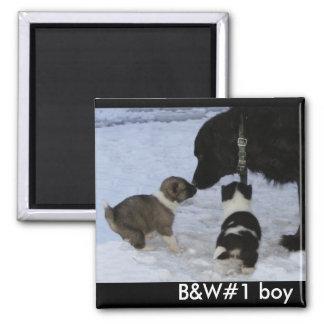 Adoptable Akita Boy Magnet