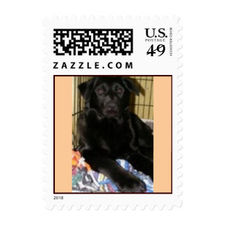 Adoptable puppy stamps