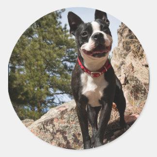 Adoptado. Boston Terrier Pegatina Redonda