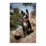 Adoptado. Boston Terrier Postales