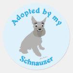Adoptado por mi Schnauzer