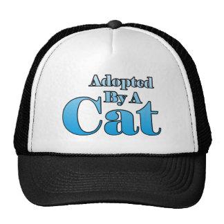 Adoptado por un gato gorra