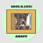 Adopte a un pegatina del perrito