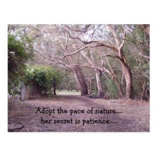 , Adopte el paso de la naturaleza….su secre… Postal