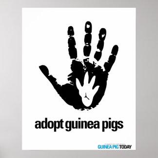 Adopte el poster de los conejillos de Indias - con