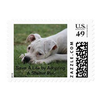 Adopte por favor la promoción con el perrito del sellos