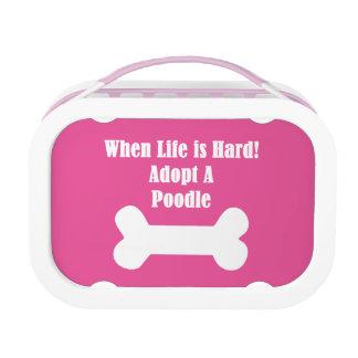 Adopte un caniche