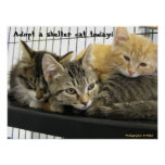 Adopte un gato del refugio hoy posters