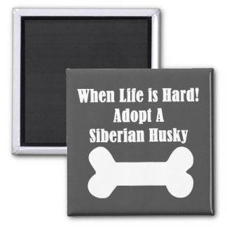 Adopte un husky siberiano imán cuadrado