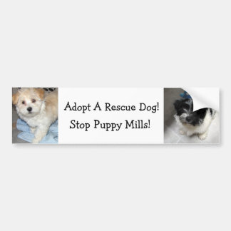 Adopte un perro de Resuce - perritos de Havanese Pegatina Para Auto