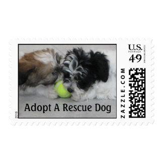 Adopte un perro del rescate sello