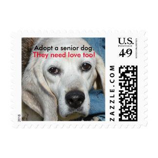 Adopte un perro mayor. ¡Necesitan amor también! Timbre Postal