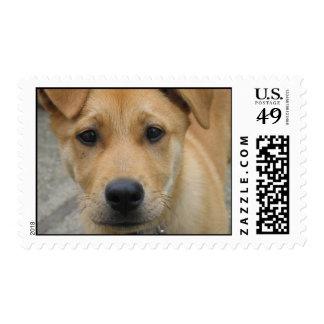 Adopte un perro sellan hoy - el mutt estampilla