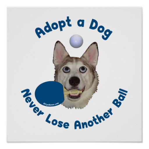 Adopte un ping-pong del perro póster
