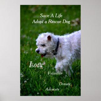 Adopte un poster/un caniche del perro del rescate póster