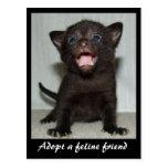 Adopte una postal felina del amigo