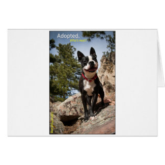 Adopted Boston Terrier Greeting Card