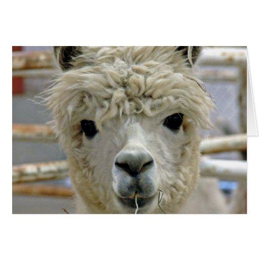 Adorable Alpaca Greeting Card
